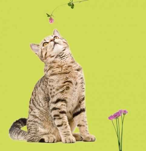 Firmenprofil von: Tierisch gesund – Homöopathie zum Reinschnuppern