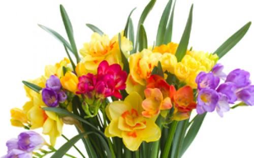 Firmenprofil von: Fröhlich bunte Frühlingssträuße
