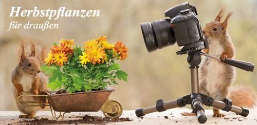Firmenprofil von: Herbstpflanzen für draußen